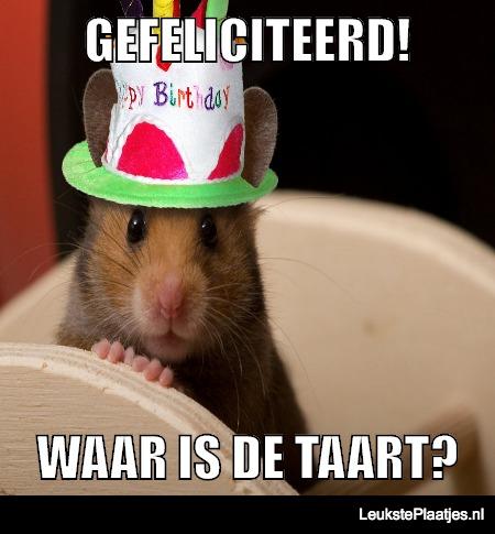 Verjaardag Hamster