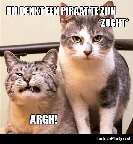 piraat kat