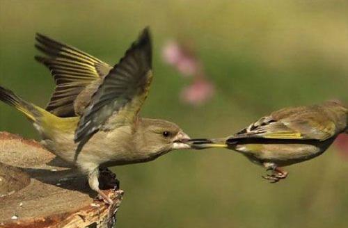 vogel lijkt vogel te grijpen