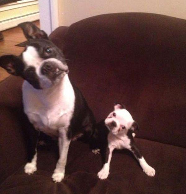 grappige vader en zoon hond