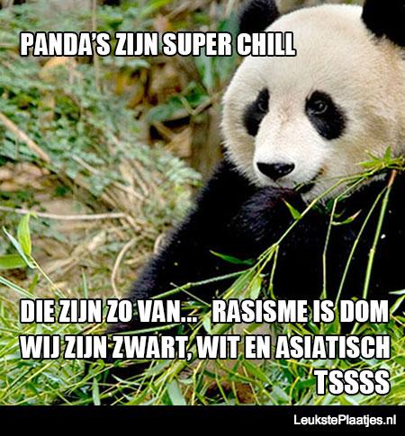 super-chill-panda
