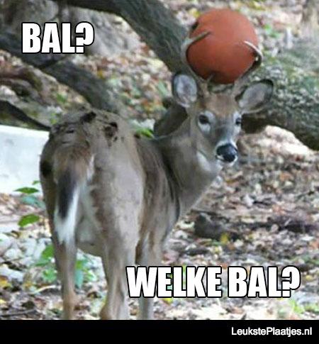 welke bal
