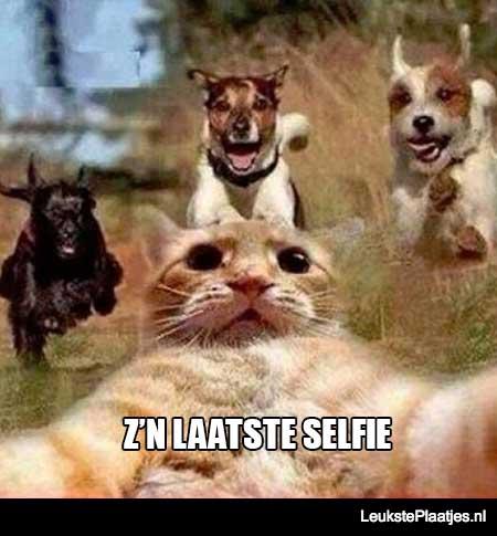 kat zijn laatste selfie