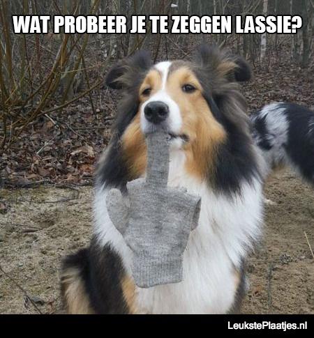 Lassie zegt