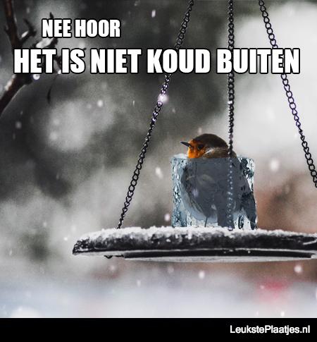 bevroren vogeltje koud buiten